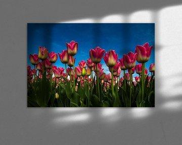 Tulpenveld von René Vos