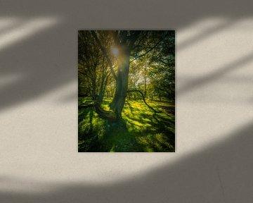 Herfststralen door de bomen van Remco Piet