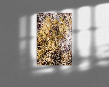 Heidekraut Blumenfeld Herbst von Nicole Schyns
