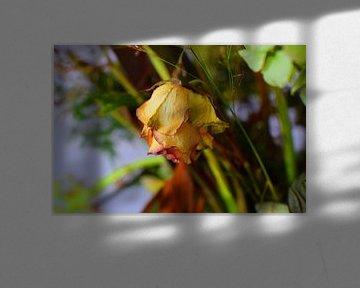 Getrocknete Rose von Ton Kuijpers