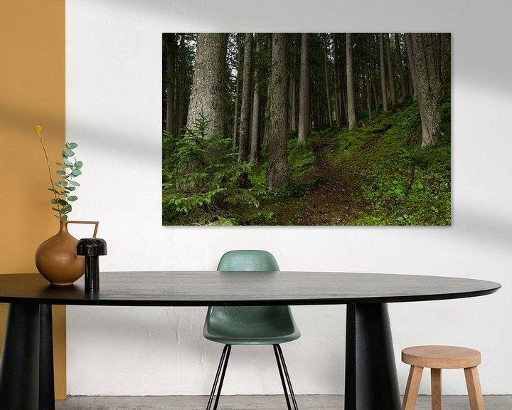 Sfeerimpressie: Wandelen door het Zwitsers woud van André Hamerpagt