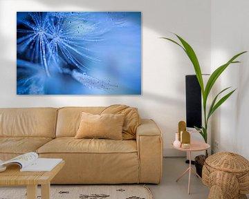 Dandelion fluff (bloem, pluis, paardebloem) van Bob Daalder