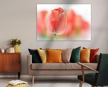 Sweet fresh Tulip... (2) (bloem, tulp) van Bob Daalder