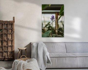 Lila Blume | Stimmungsvoller botanischer Garten von Leathitia Zegwaard
