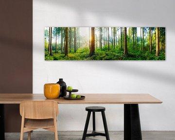 Ein idyllischer Sonnenaufgang im Wald von Günter Albers