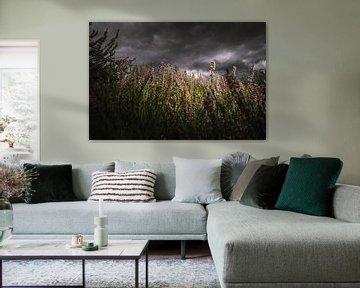 Bloeiende paarse heide onderHollandse  wolkenlucht van Fotografiecor .nl