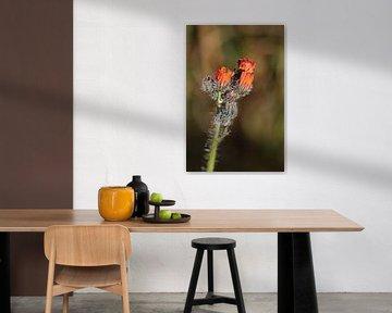 Orangenblüten mit Tau von Eline Lohman