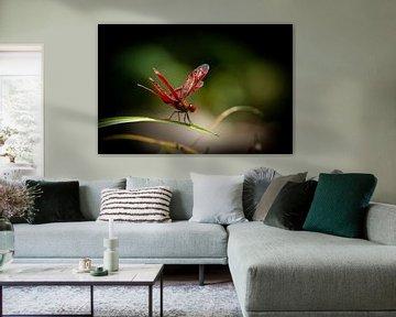 Rode libelle van Jeroen Meeuwsen