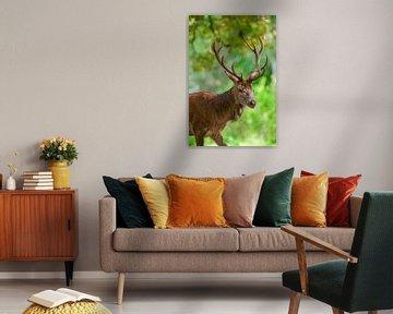 Rotwild Hirsch im Wald im Frühherbst von Sjoerd van der Wal