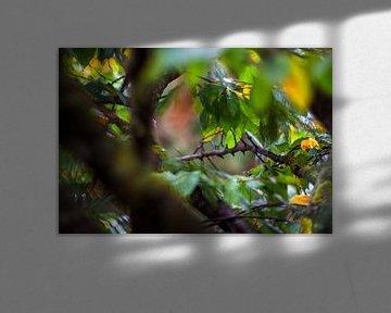 Concept autumn : Leaves on a tree von Michael Nägele