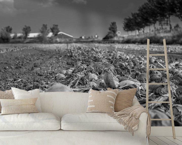 Beispiel fototapete: Wartende Zwiebeln aus Zeeland von Roland van Tilborg
