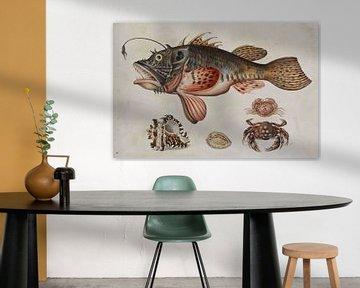 Strömung von Tiefseefischen, Krabben und Seeschnecken