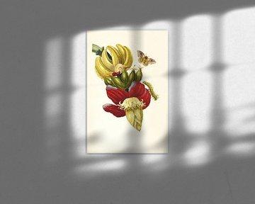 Druck der Bananenpflanze