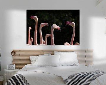 Flamingo-Treffen von Ruud Jansen