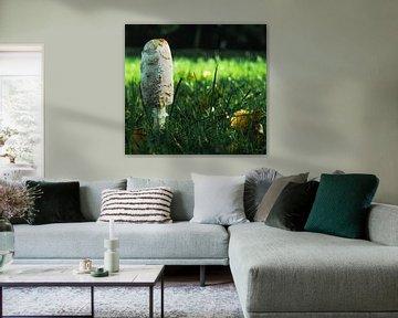 paddenstoel voor het bos van Marjon Boerman