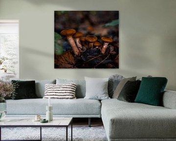 Pilzfamilie von Marjon Boerman