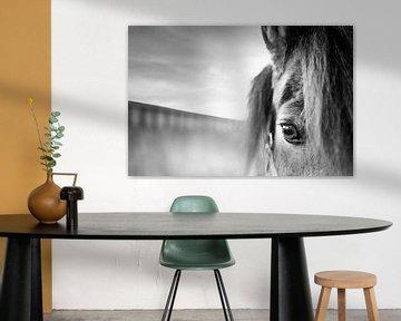 cheval sur Günter Albers