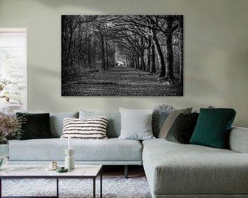 Bos in zwart wit fotografie