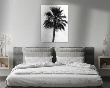 Palmboom in de wind van Suzanne de Jong