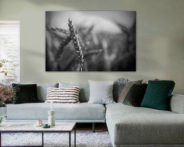 Getreideklinge, schwarz-weiß von Billy Cage