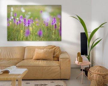 Blumenwiese im Hochmoor von Franziska Jungen