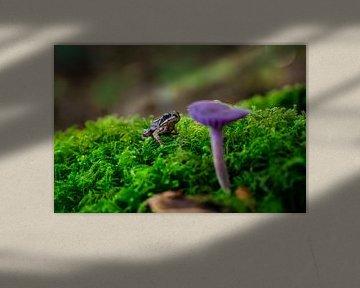 Frosch schaut auf einen lila Pilz. von Fotografiecor .nl