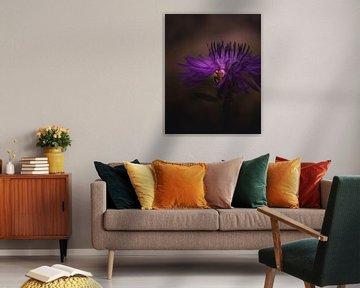Kornblumen-Spinne von Sandra Hazes