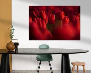Rote Tulpen von Rick Kloekke
