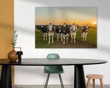 Kühe bei Sonnenuntergang von Karin Riethoven