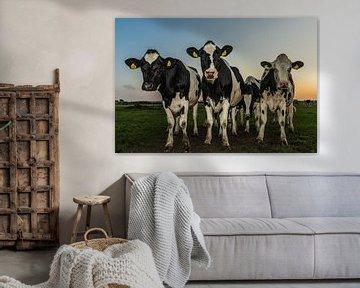 Neugierige Kühe von Karin Riethoven