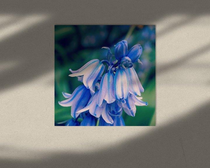 Sfeerimpressie: Bluebells van Jon Houkes