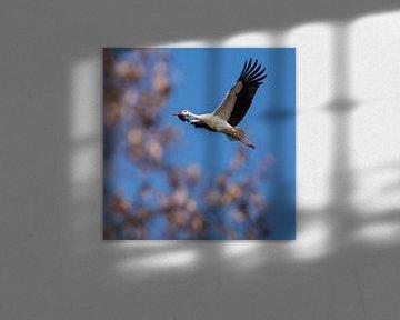Storch schwebt in der Luft von Tobias Luxberg