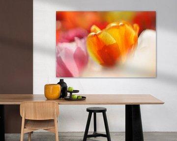 Blumen der Niederlande, rosa, orange, weiße und gelbe Tulpen von Discover Dutch Nature