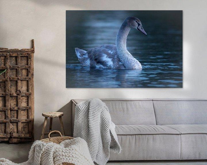Sfeerimpressie: Zwaan bij zonsopkomst van Gijs Verbeek