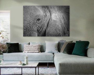 Gros plan sur un éléphant d'Afrique sur Krijn van der Giessen