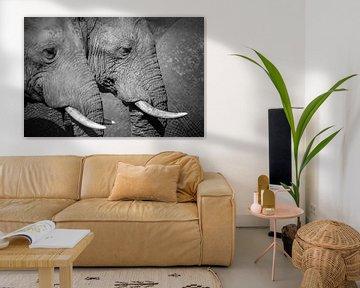 Olifanten symmetrie van Krijn van der Giessen