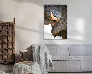 Drinkende olifant close-up van Krijn van der Giessen