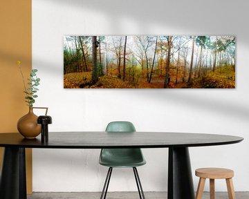Panorama forestier en automne sur Günter Albers