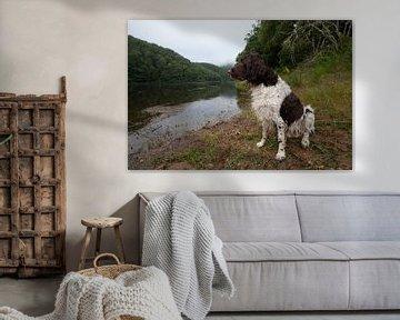 Kleinde munsterlander (heidewachtel) naast een rivier van Joost Adriaanse