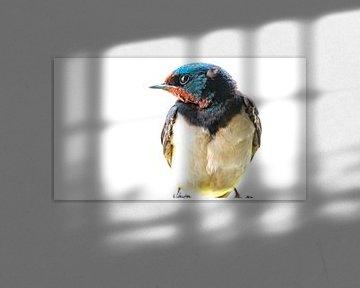 Portret van de boeren zwaluw van Ed van der Hilst