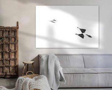 High-key van vliegende Jan van Gent van Aranka Delina Janné