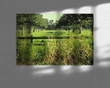 Holländische Landschaft, grüne Wiesenbäume, Ölfarbe von C. Catharina