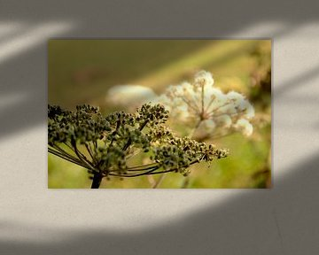 Blumen Natur Ölgemälde Impressionen von C. Catharina