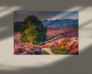 paars landschap van Pim Leijen