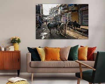 Les saintes vaches indiennes sont dans le groupe sur la rue de la ville. Jaisalmer est situé au cœur sur Tjeerd Kruse