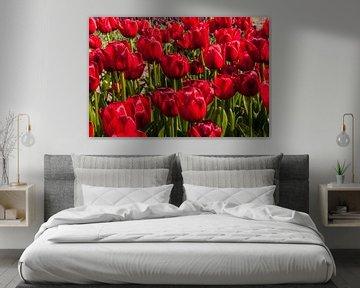 Rode Tulpen Beeldvullend von Brian Morgan