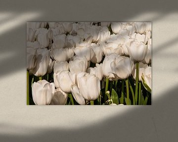 Beeldvullend tulpenveld met witte tulpen von Brian Morgan