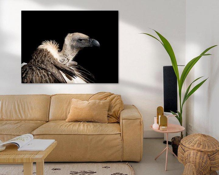 Beispiel: Nahaufnahme eines Geiers in Südafrika von John Stijnman