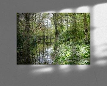 Grünes Guckloch von Carla van Zomeren