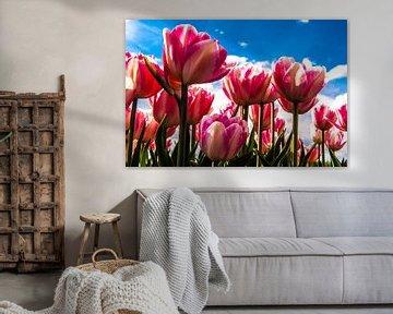 close up tulpen met blauwe achtergrond en wolkenlucht von Brian Morgan
